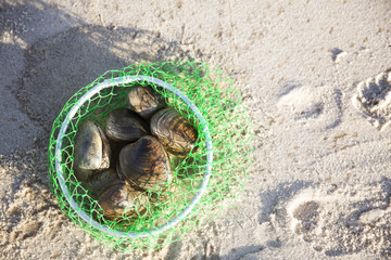 Overhead view of clams in bucket on sand at beach