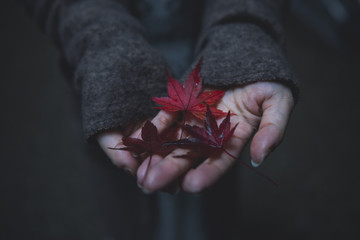 Red maple leaves in woman's hands