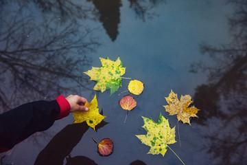 Man putting fallen leaf on water surface