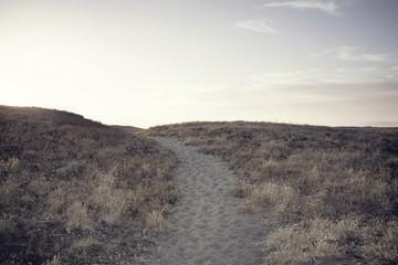 View along desert footpath Fotoväggar