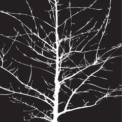 Shape of  Tree without Leaves. Vector Illustration and backgroun