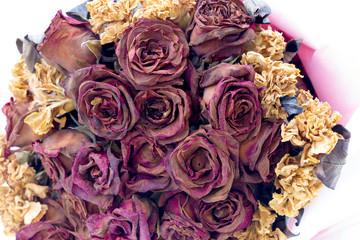 love roses wilt, dry