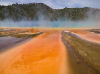 Microbial Orange