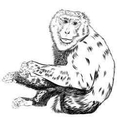 Foto op Canvas Hand getrokken schets van dieren Chimpanzee drawing vector. Animal artistic, use for your design.