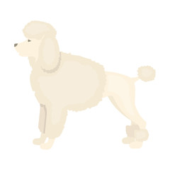 Poodle vector icon in cartoon style for web