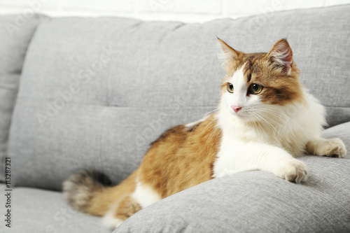 beautiful cat on a grey sofa close up photo libre de droits sur la banque d 39 images fotolia. Black Bedroom Furniture Sets. Home Design Ideas