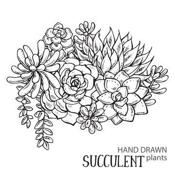 Hand drawn succulent plants.