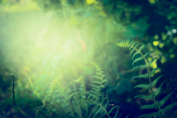 Fern leaves on dark  jungle or rainforest nature background, outdoor