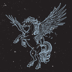 Pegasus supernatural beast. Sketch isolated on white background
