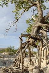 Heavy erosion along Hoanib River, Kaokoland, Namibia, Africa