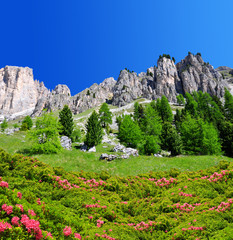 Beautiful mountain landscape in Dolomites at the foreground of blooming azaleas,Trentino, South Tirol, Italy