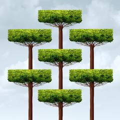 Organization Structure Growth
