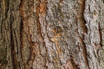 Tree bark texture / background
