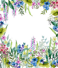 Watercolor wild herbs and flowers