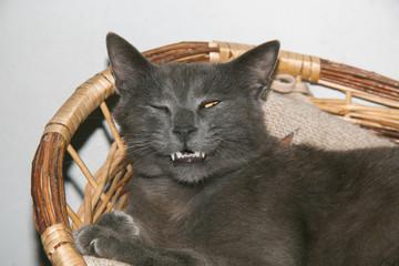 Cat winking sitting on a basket