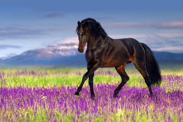 Stallion trotting in flowers against mountains