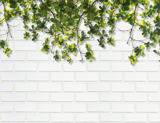 leaf with shadow against white brick wall