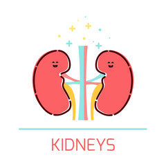 Cute healthy kidneys icon made in cartoon style. Kidneys cartoon character. Human body organs anatomy icon. Medical human internal organ symbol. Medical concept. Vector illustration.