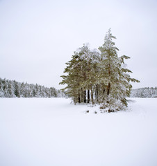 Snow covered landscape with coniferous trees against blue sky