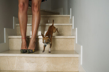 legs of woman with her dog
