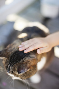 Person's hand petting cat