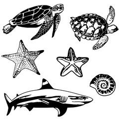 Set of sea, ocean animals, elements. Seahorse, blue marlin, clown fish, coral, lionfish. Vector.