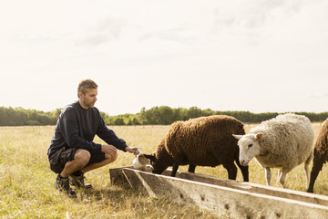 Farmer crouching while feeding sheep at farm