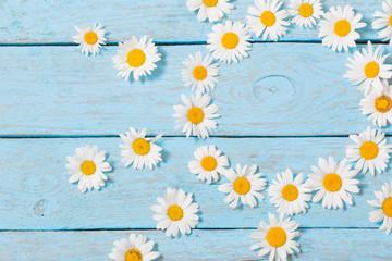 chamomile  flower over blue wooden background