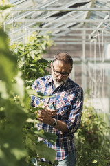 Gardener holding pruning shears and examining plants in greenhouse