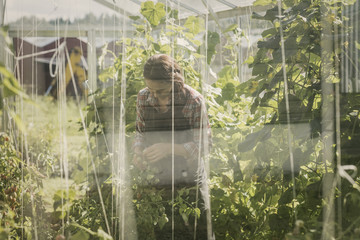 Woman gardening in greenhouse seen through glass window