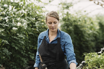 Female gardener wearing apron and looking at potted plants in greenhouse