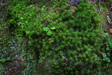 Green moss spruce trunk root shamrock leaf clover