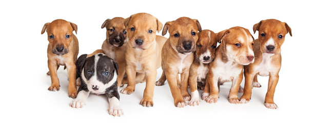 Puppies Facebook Cover Image