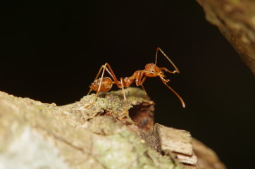 Small ant on green leaf and tree