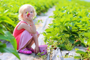 Young children picking strawberries in the farm. Small toddler girl harvesting healthy berries in the garden. Healthy bio food concept.