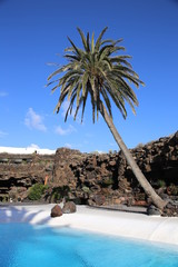 palm tree in Lanzarote