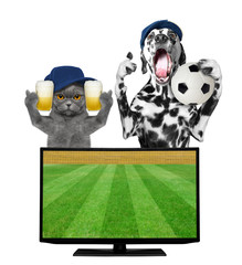 Dog and cat with ball and beer fan football championship