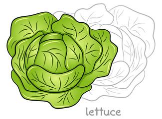 gezeichneter Kopfsalat