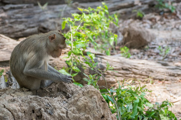 Monkey live in nature