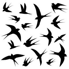 swallows circling