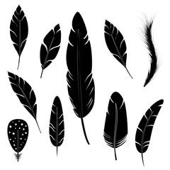 Feather of bird