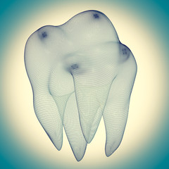 image of the human tooth
