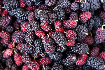 Fresh ripe mulberry berries background. Closeup view