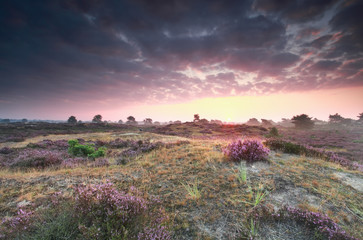 Foto op Aluminium Natuur purple summer sunrise on heathland