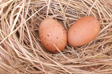 eggs in a nest of grass