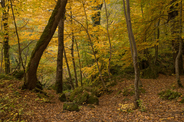 Fantasy fall landscape