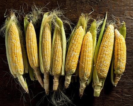 Fresh Local Organic Corn on the Cob