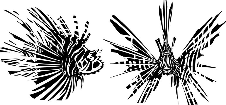 Two sides of a LionFish