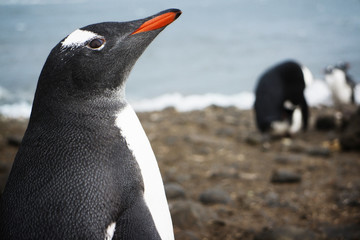 Close-up of penguin on field by sea