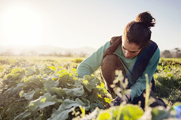 Woman examining plants in field